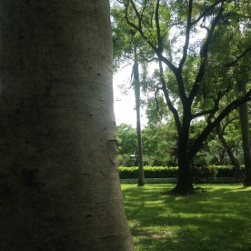 More park trees